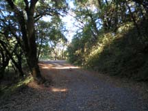 Photo of a tree lined path on the Mount Madonna Challenge by writer Angela Young